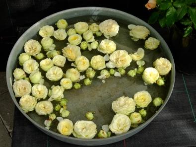 dekoration roser