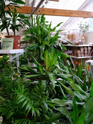 gronne-planter_juleudsalg