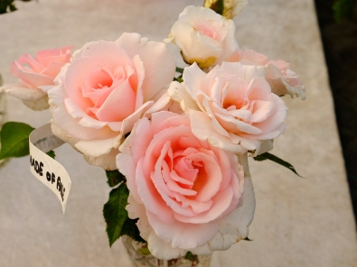 lys lyserød rose