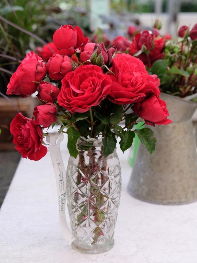 rød rose vase