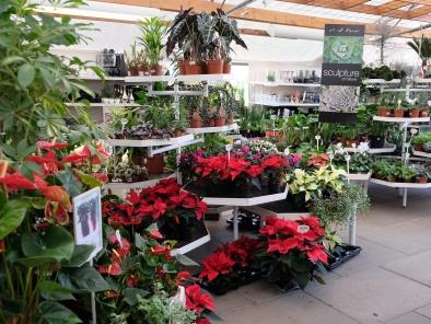 julestue grønne planter