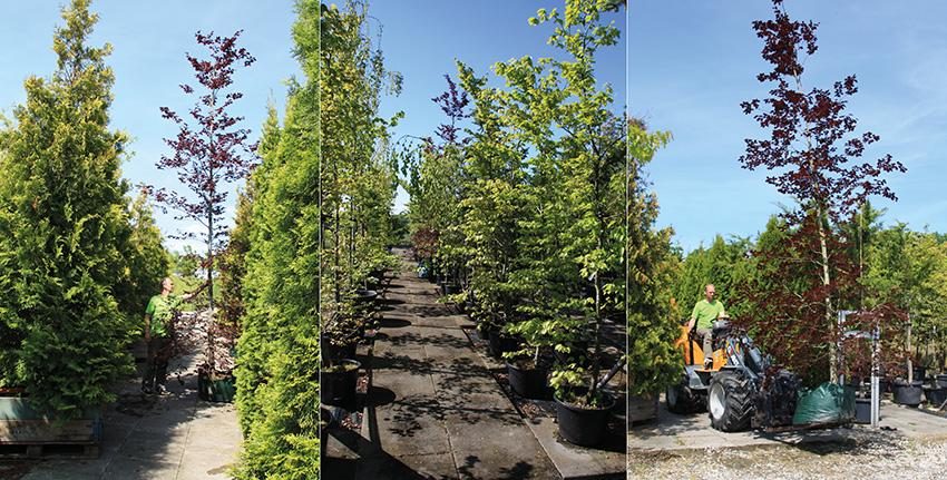 XL træer til web