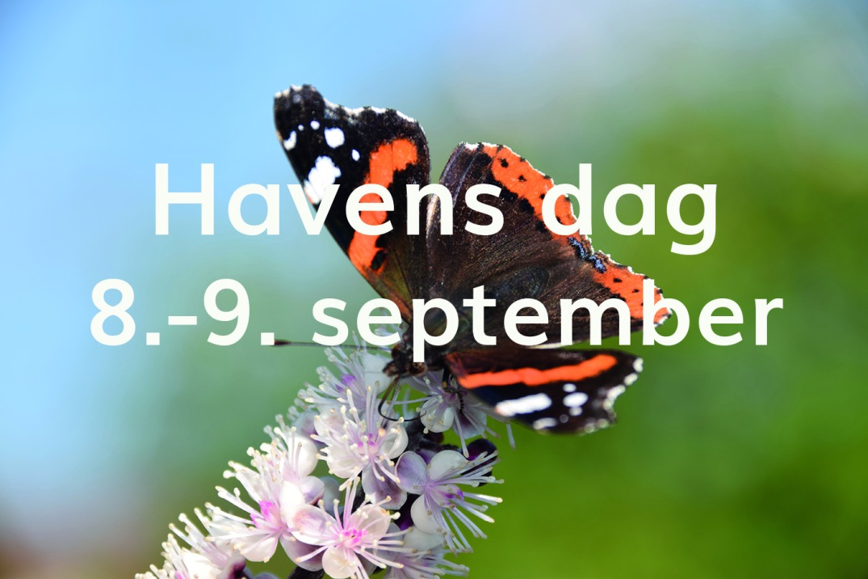 sommerfugl_havens dag