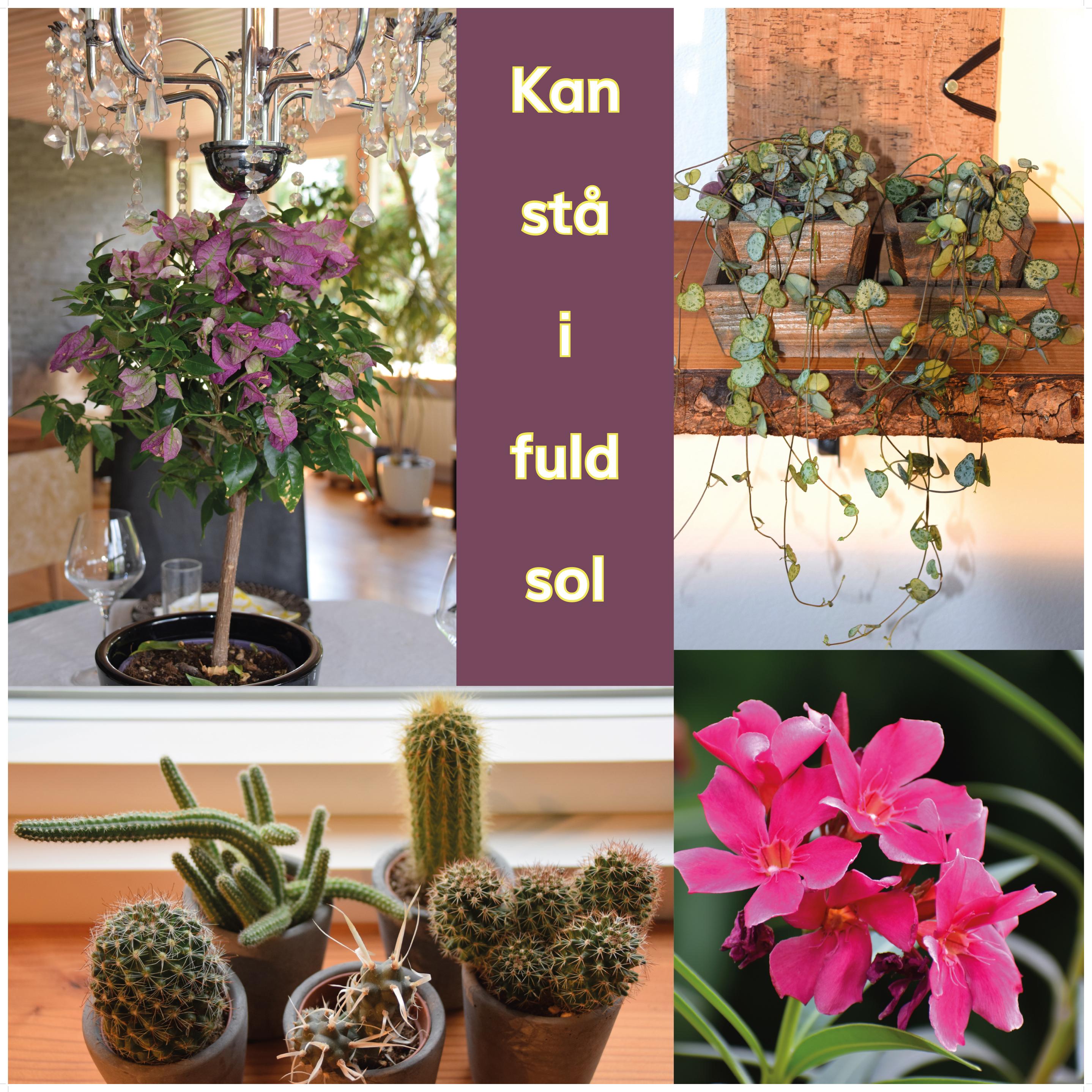 stueplanter der kan stå i fuld sol