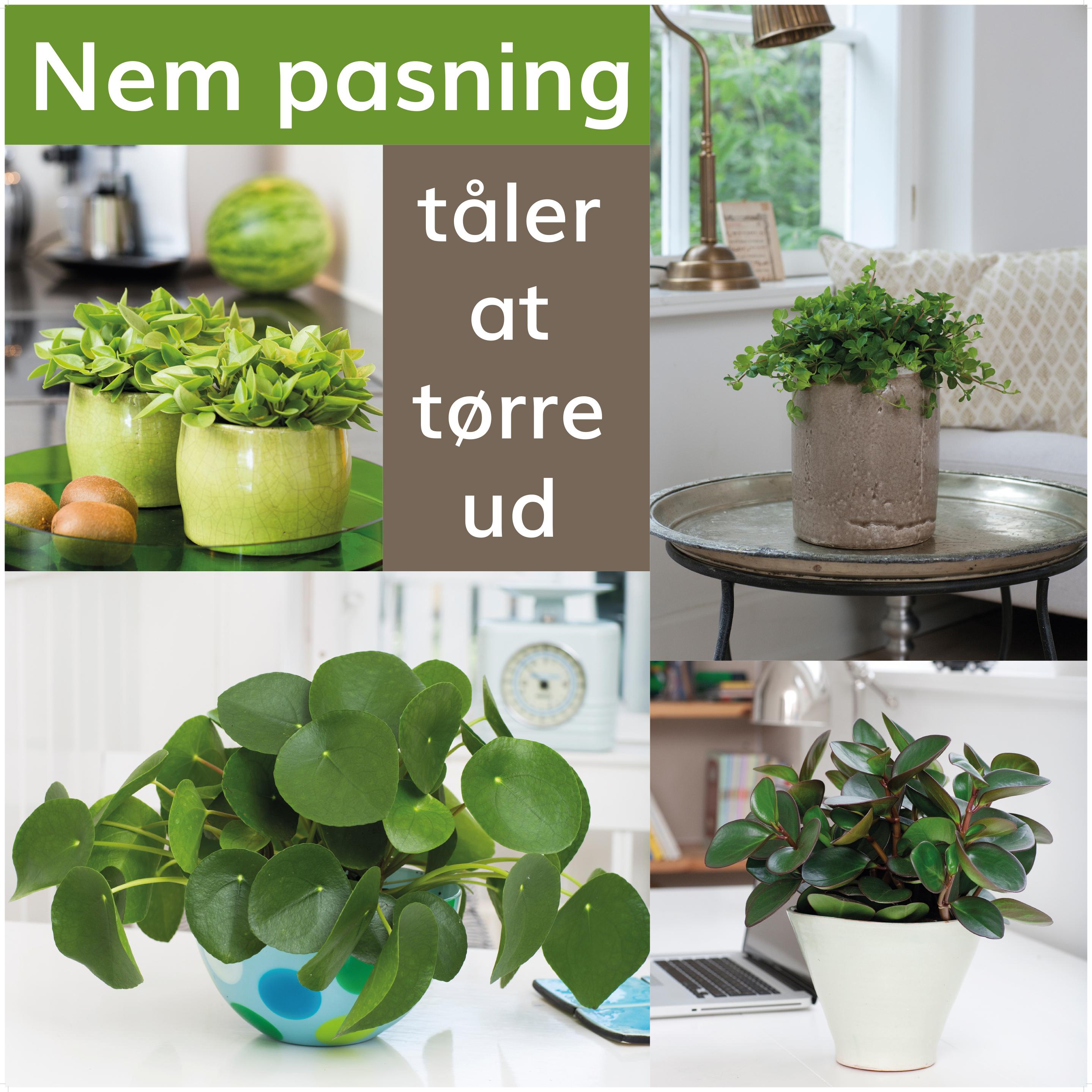 stueplanter der er nemt at passe